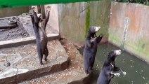 Cette vidéo d'ours affamés en captivité dans un zoo indonésien a suscité l'indignation