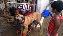 Un chien se fait laver par des enfants