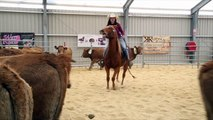 Cheval Passion : 160 cowboys en compétition pour trier du bétail