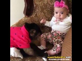 Bebişin Çoraplarını Çıkardıktan Sonra Kokuyor mu Diye Koklayan Maymun