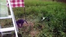 Un chien et un chat font un cache-cache dans les herbes hautes !