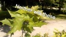 Plants Plants Plants-Q57giy1BN7Y