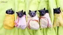 22 Adorable Animals Who Absolutely Insist They Are Burritos 2016