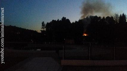 (English) Swimming Pool burning hot on January. Codessais, Vila Real, Portugal, 2017JAN19.  (Português) Piscina a arder em calor em Janeiro. Codessais, Vila Real, Portugal, 2017JAN19   4K UHD 2160p
