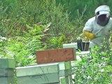 Les apiculteurs exhortent l'Etat à déclarer l'état de calamité agricole-YFY7tkGiS0E