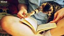 33 Cats Who Think You've Done Enough Reading For Today   funny cat photo 2016