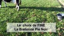 Le choix de Fine, la Bretonne Pie Noir  - Cédric Briand