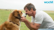 "A Dog's Purpose Producer Pens Op-Ed About Film's Controversy: ""Love of Animals Defines My Existence"""