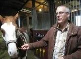 La passion du Paint-horse