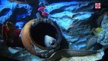 Sea Animals Mega Collections   Sea Animal Names for Kids & Children   Sea Animal Videos