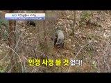 [실제상황] 야생멧돼지를 잡는 사냥개들! [광화문의 아침] 374회 20161207