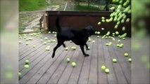 Va chercher la balle... Trop mignon le chien