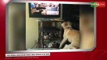 Un chien veut jouer avec d'autres chiens à la télé