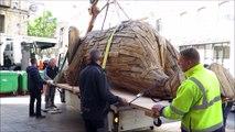 Arrivée éléphant musée lapidaire d'Avignon
