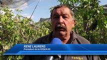 Hautes-Alpes : Les banques, la solution pour sauver les arboriculteurs ?
