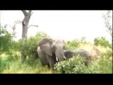 Elephant herd with a cute baby - Kruger Sightings - 23 Feb 2011 - Latest Sightings Pty Ltd