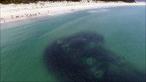 Des requins cachés dans un banc de poissons devant la plage... CHAUD !
