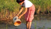 Amazing Fishing at Pailin Province - Cambodia Traditional Fishing - Khmer Net Fishing (Part 216)