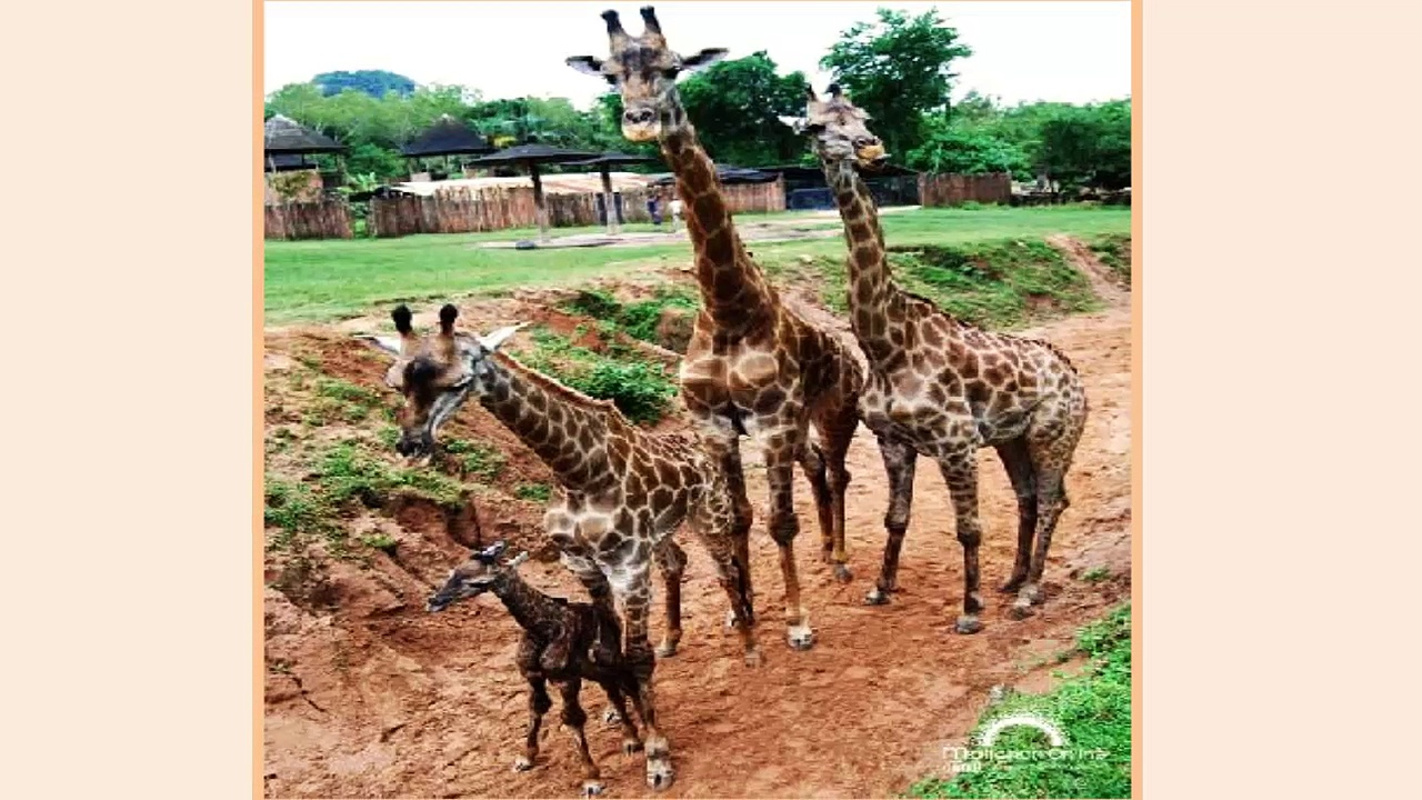 african animals pictures