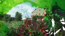 Folies Botaniques dans les Serres #4 : Espèces insolites