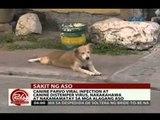 24 Oras: Canine parvo viral infection at canine distemper virus, nakamamatay sa mga alagang aso