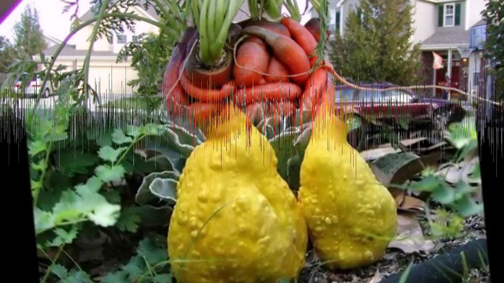Забавные овощи и фрукты.#5.Amusing vegetables and fruit.#5.