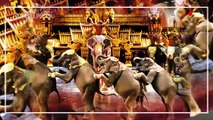 Таиланд достопримечательности  Паттайя и все самое интересное  Тайланд для вас