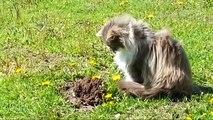 Un chat aperçoit une taupe qui sort du sol, et sa réaction est alors tout simplement hilarante...