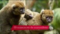 Parc Zoologique de Paris : l'année 2016 en chiffres et en images