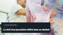 Infiltré dans un abattoir, un journaliste raconte la souffrance animale et humaine