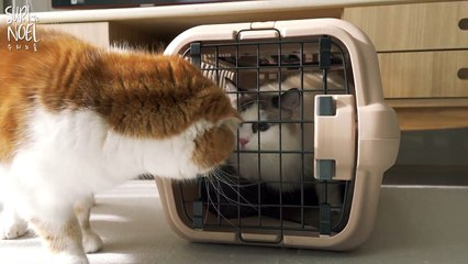 New Cat!! Taking Care of My Brother's Cat 새로운 고양이!! 친동생네 고양이 탁묘하는 날