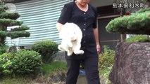 Ce chat et ce lapin sont de très bons amis. Quand vous verrez ce qu'ils font, vous allez fondre !