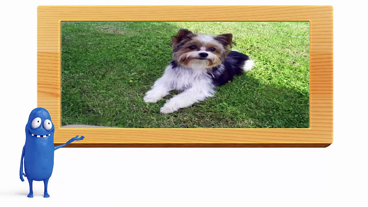 A review of small dog breeds by Lydur Gudmundsson