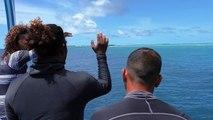 Diving with Giant Manta Rays, Maldives - Indien und Afrika Reisen-FRTFEnd1cQg