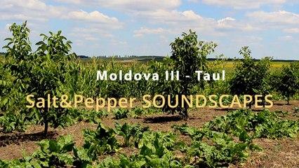 Moldova III - Taul