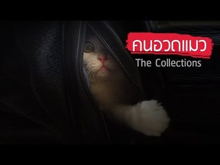 Theycallmemeaow - คนอวดแมว The Collections