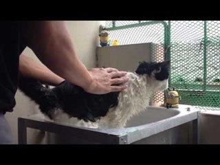 Theycallmemeaow - อากาศดีๆเส้าหลินอาบน้ำ