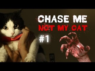Theycallmemeaow - CHASE ME NOT MY CAT