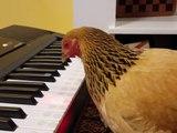 Quand une poule joue l'hymne Américain au piano