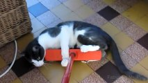 Cats and Brooms, Brooms and Cats