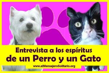 Entrevista a los espiritus de un Perro y un Gato - El Mensajero Solitario.org