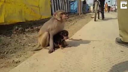 Monkey And His Dog