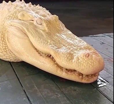 Un alligator albinos qui refuse de sourire