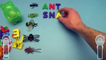 Kinder Surprise Egg Learn to Spell! Spelling Creepy Crawlers! With Gummy Bear Surprise Egg