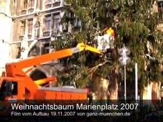 Fichte aus der Ferienregion Tegernsee zierte den Christkindlmarkt 2007 auf dem Marienplatz