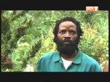 Lutte contre la Drogue: Une bande de vendeurs de Canabis interpélés à Abobo
