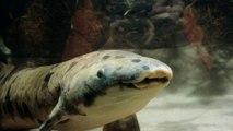 Le plus vieux poisson d'aquarium est mort