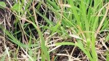 Reptiles - Lézard des souches - La faune et la flore de M&M