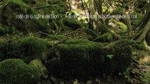 Mammifères - Campagnol roussâtre - La faune et la flore de Meurthe-et-Moselle