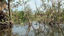 Amphibiens - Grenouille rieuse - La faune et la flore de M&M